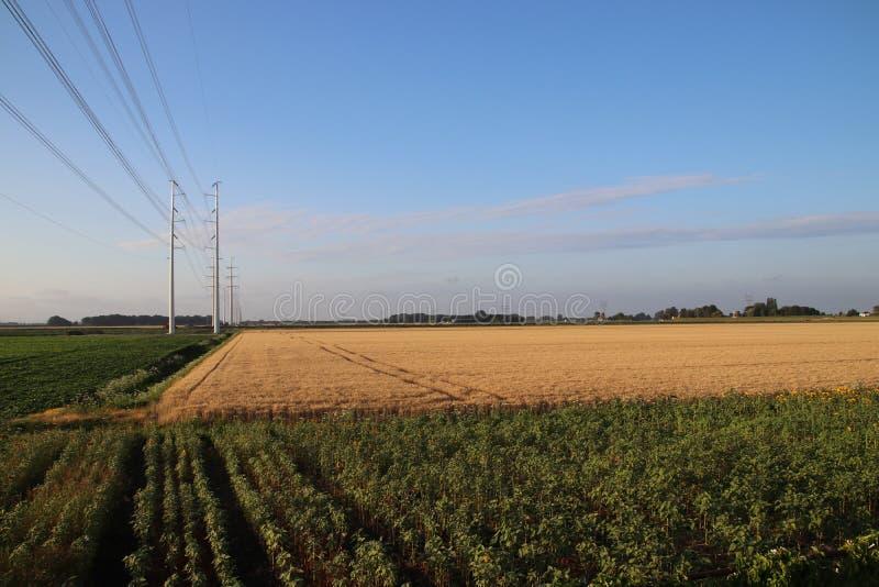 新的输电线在朝向到莱顿的Bleiswijk的开拓地作为380Kv圆环一部分在荷兰 图库摄影