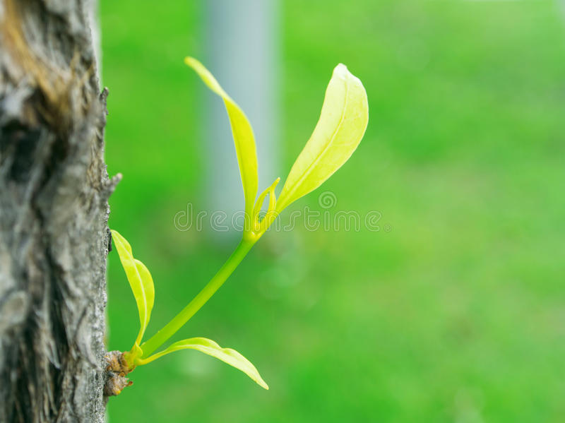 新的年幼植物 图库摄影