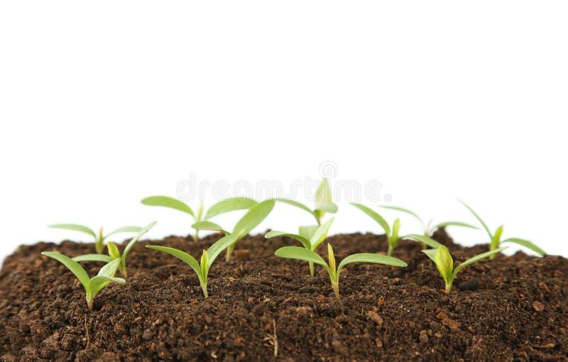 新的绿色植物 免版税库存照片