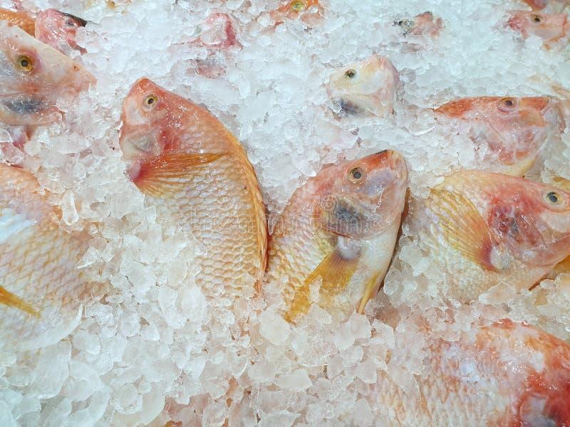 新红色罗非鱼顶视图待售在鱼市上 免版税库存照片