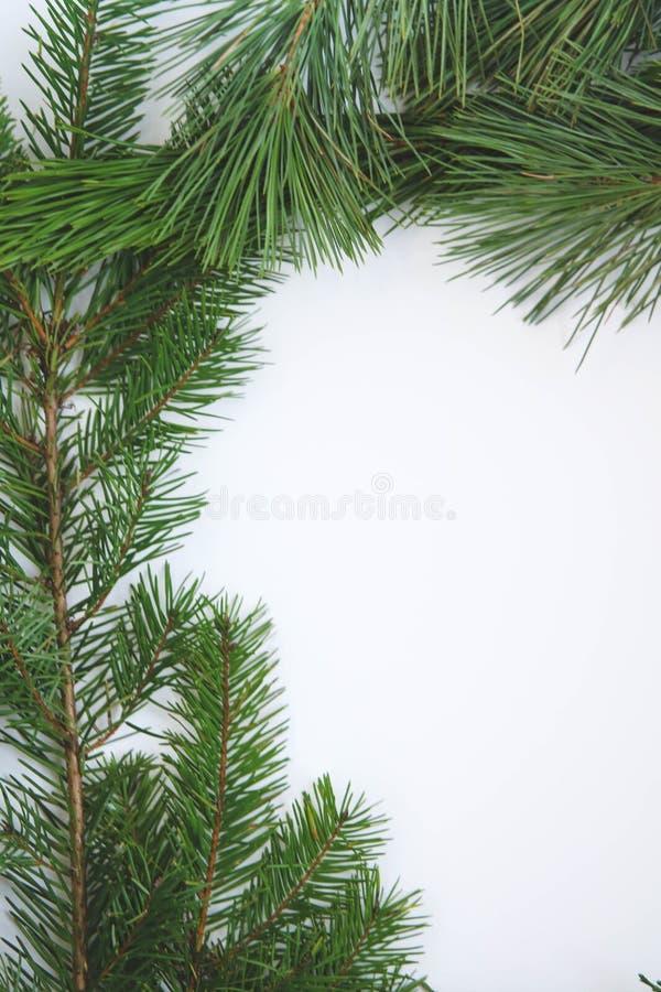 新绿色常青大树枝边界 图库摄影