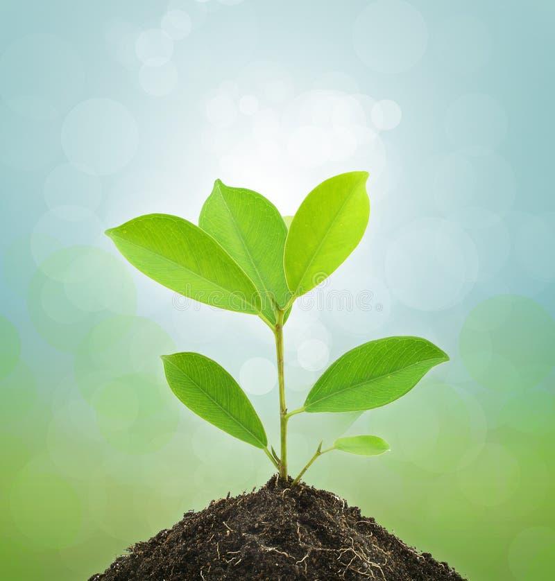 新绿色植物和土壤。 库存照片