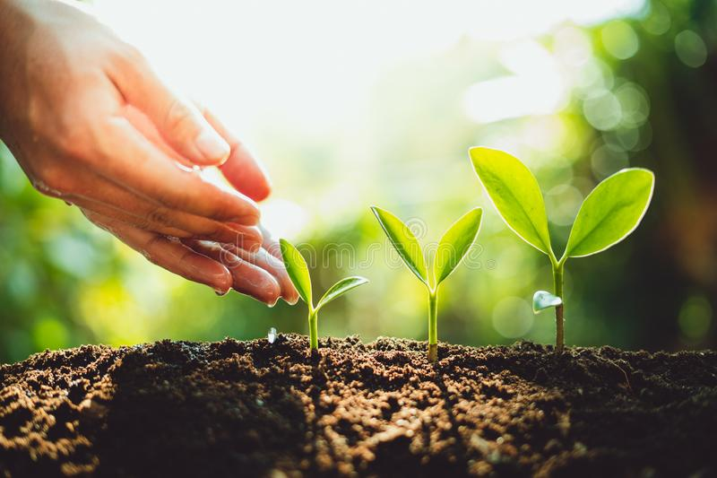 新绿色植物生长,树成长步本质上和美好的早晨照明设备特写镜头  库存图片