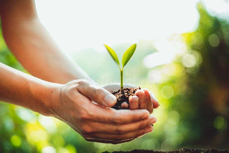 新绿色植物生长,树成长步本质上和美好的早晨照明设备 免版税库存图片
