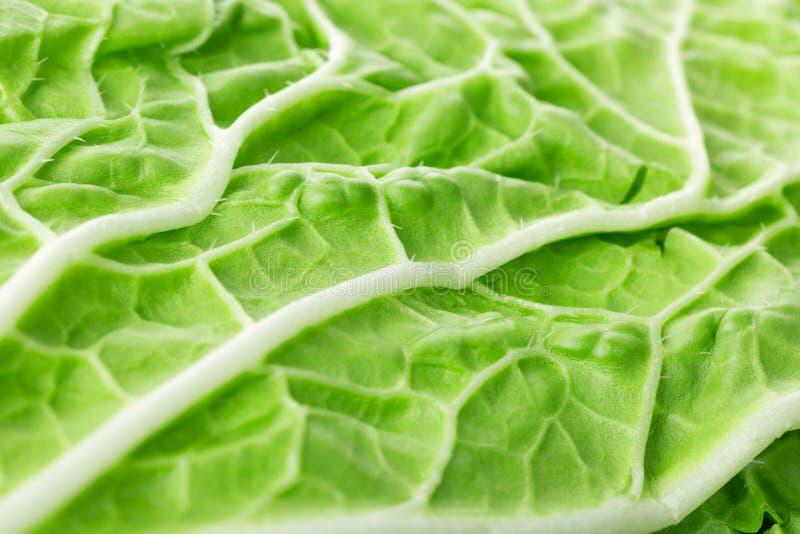 新绿色莴苣沙拉圆白菜叶子关闭作为背景 选择聚焦 库存照片