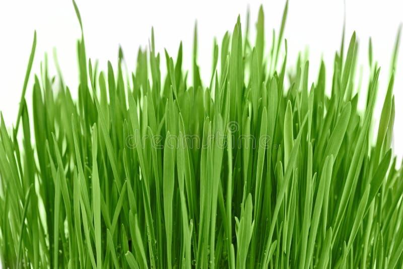 新背景新的草绿色 库存照片