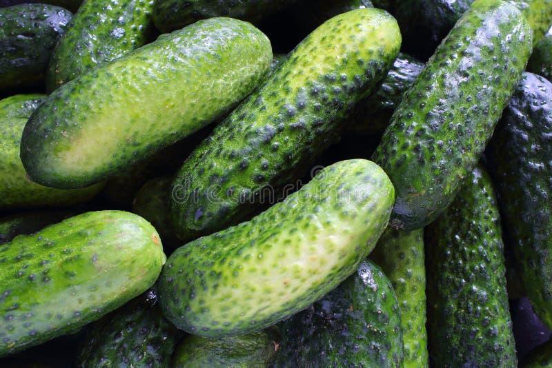 新腌制的黄瓜特写镜头食物背景 免版税库存图片