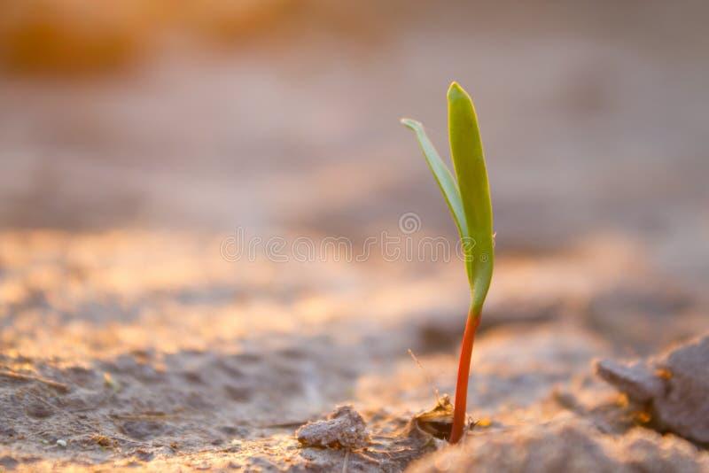 新芽在点心增长 库存图片