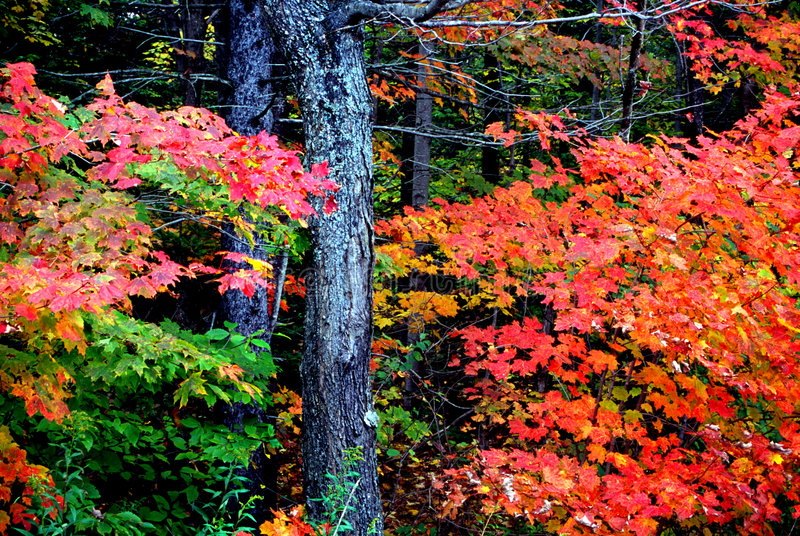 新英国的叶子 免版税图库摄影