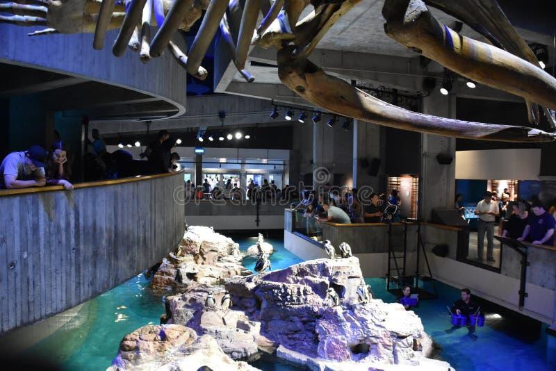 新英格兰水族馆在波士顿,马萨诸塞 免版税图库摄影