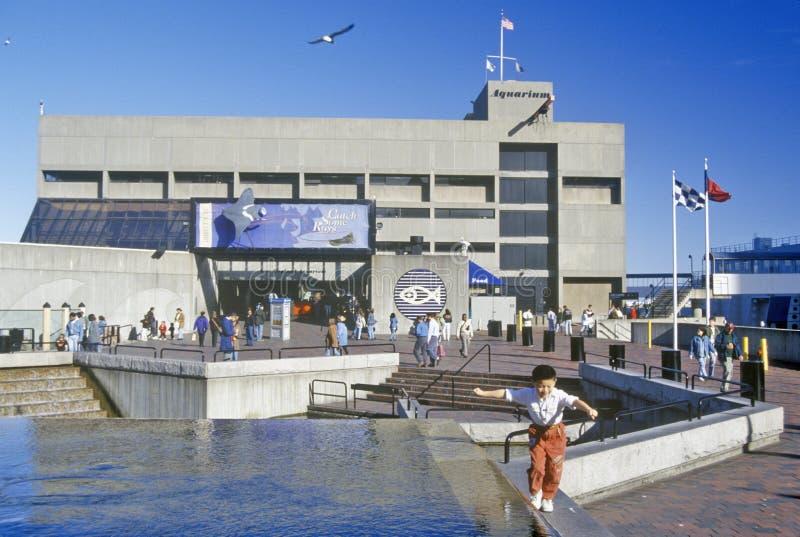 新英格兰水族馆,波士顿,马萨诸塞 库存图片