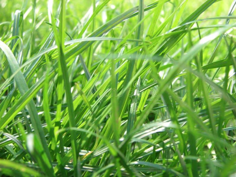 新草绿色春天 库存图片