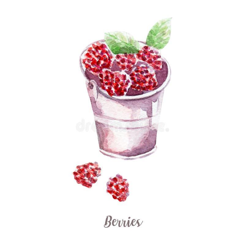 新莓果例证 在白色背景的手拉的水彩 皇族释放例证