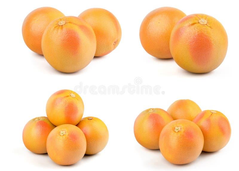 新葡萄柚红色 免版税库存照片