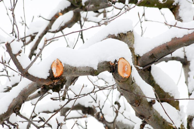 新被修剪的苹果分支在冬天 免版税库存照片
