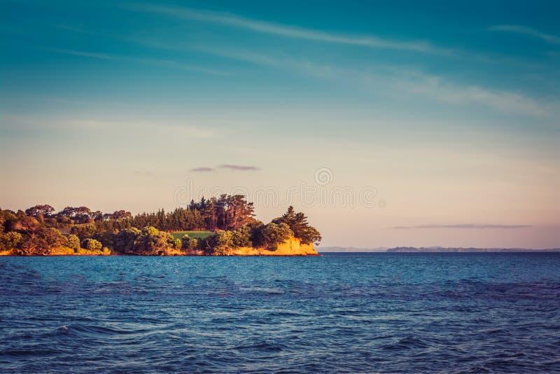 新西兰偶象风景-树和峭壁的llush绿色在蓝色海 库存照片