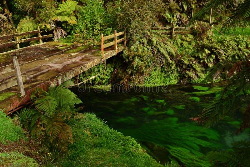 新西兰独特的小河用清楚的水 库存图片