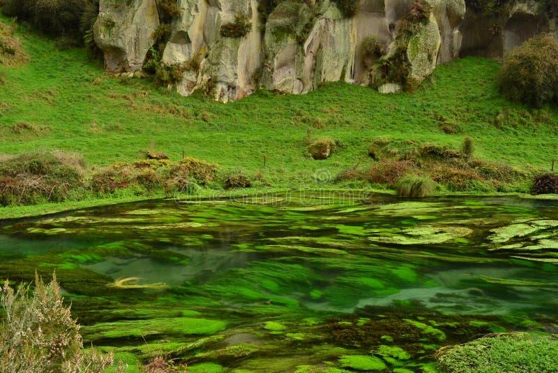 新西兰独特的小河用清楚的水 免版税库存照片