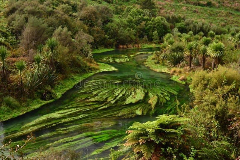 新西兰独特的清楚的水小河 免版税库存图片