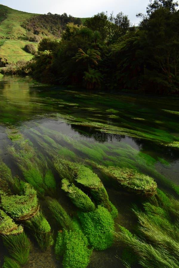 新西兰独特的清楚的水小河 免版税图库摄影