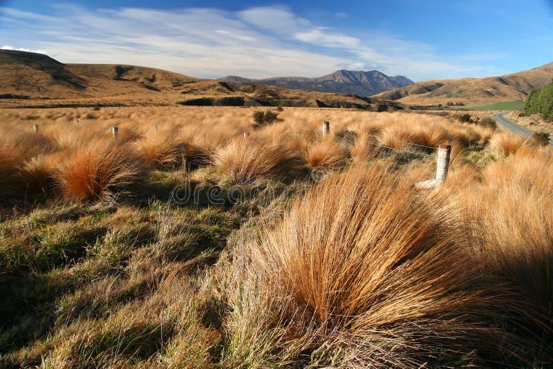 新西兰草原 库存照片