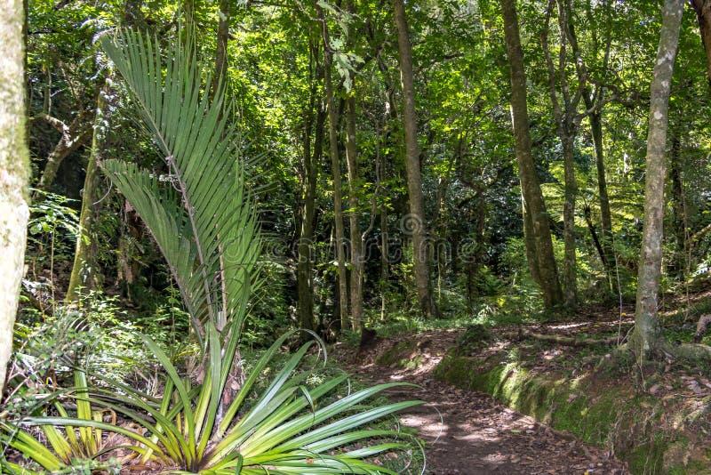 新西兰道路穿过有棕榈的森林 免版税库存图片
