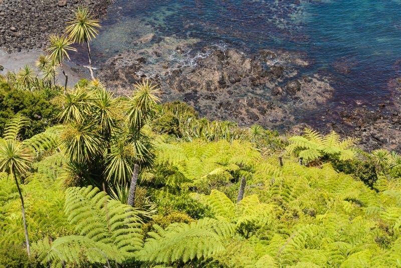 新西兰雨林 图库摄影