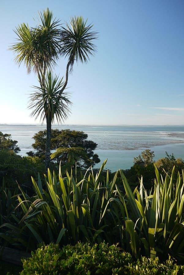新西兰:庭院本地植物海视图 库存照片