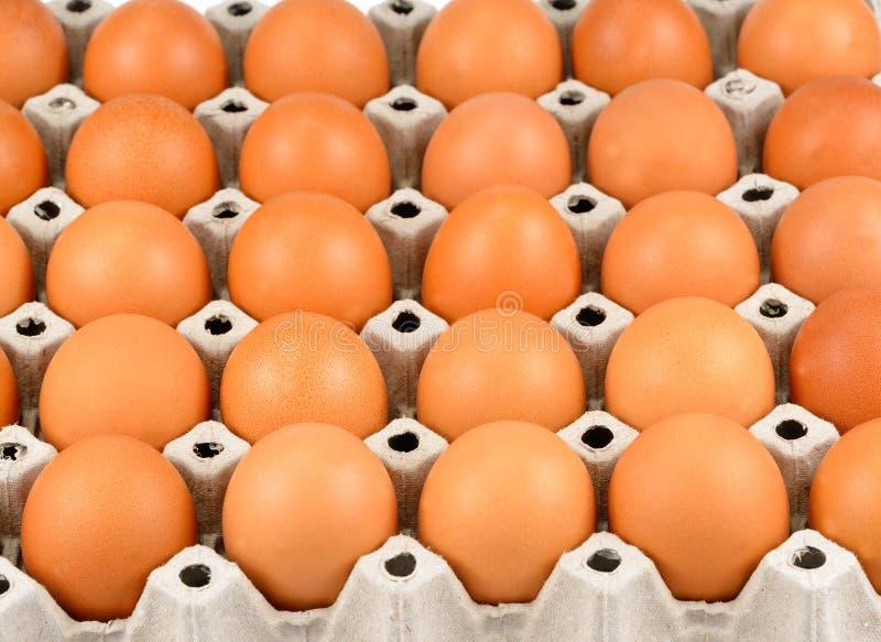 新近地下的自由放养的有机鸡蛋,新鲜的鸡蛋充分的盘子  库存图片