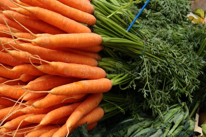 新近地全部的红萝卜 免版税库存图片