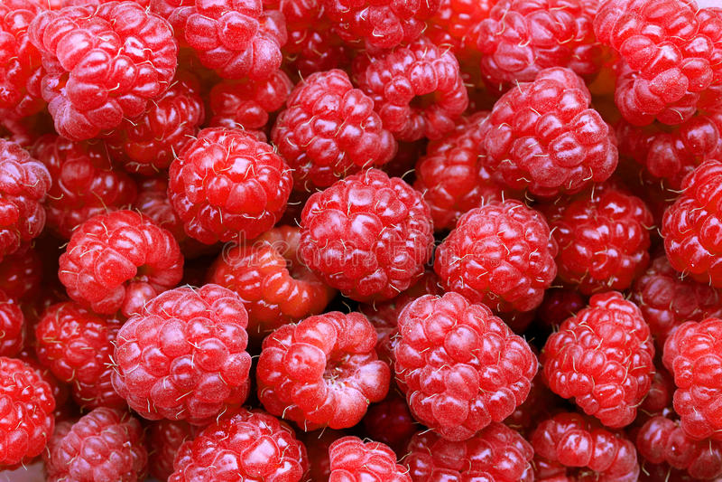 新近地成熟红草莓的一种美好的选择 免版税图库摄影