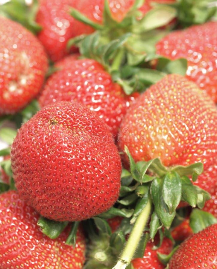 新近地摘的草莓 免版税图库摄影