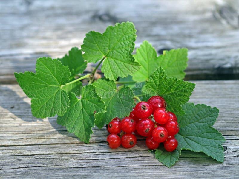 新近地收获了与叶子的红浆果莓果在老木背景 库存图片