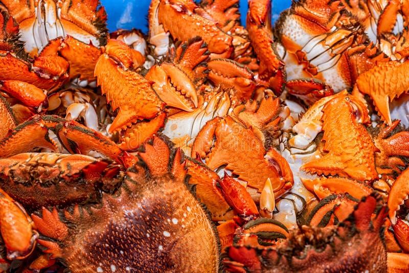 新近地煮熟的扳手螃蟹 库存照片