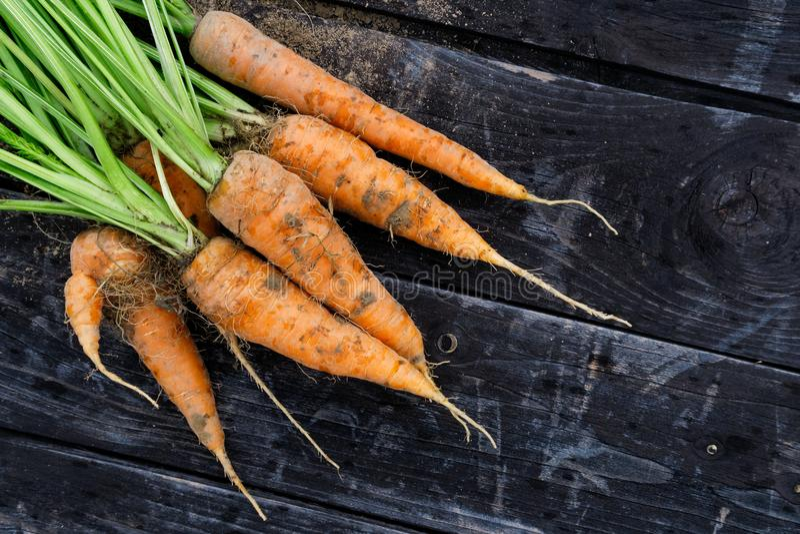 新近地被收获的束在土气黑暗的木头的红萝卜从abov 免版税库存图片