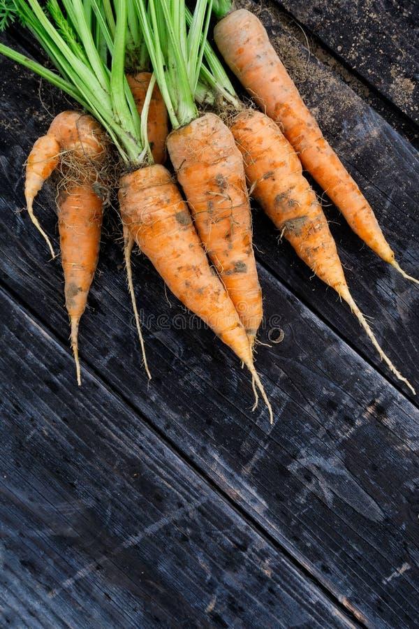 新近地被收获的束在土气黑暗的木头的红萝卜从abov 库存照片