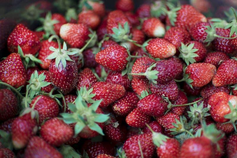 从新近地被收获的草莓的背景,直接地上面 免版税库存图片