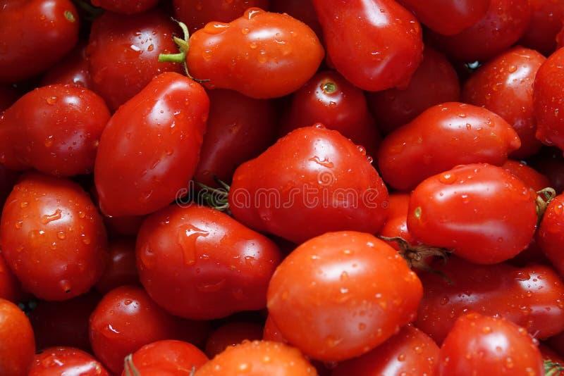 新近地被采摘的和被洗涤的罗马蕃茄 免版税库存图片