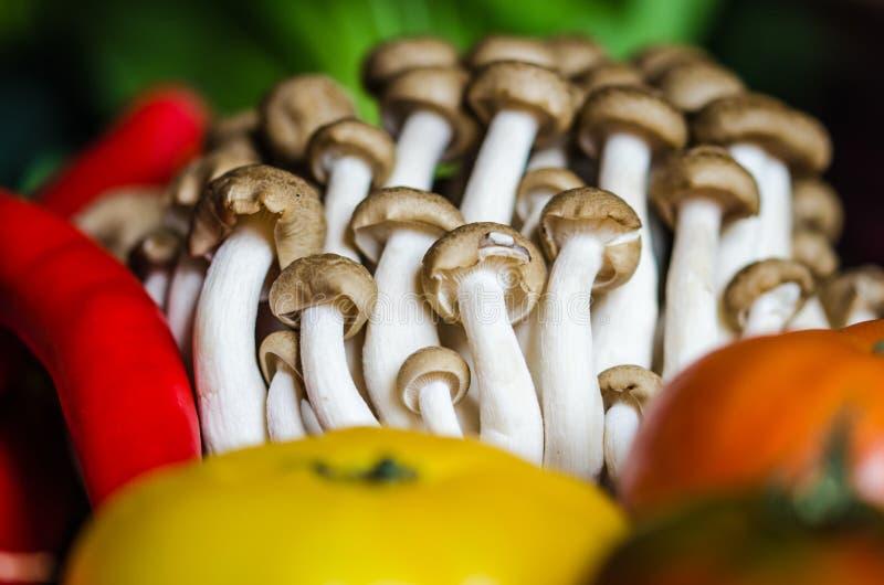 新近地被采摘的套蘑菇 免版税库存图片