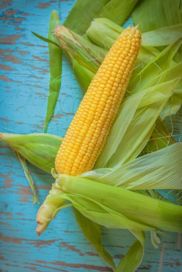 新近地被采摘的玉米穗,甜玉米棒子 免版税库存照片