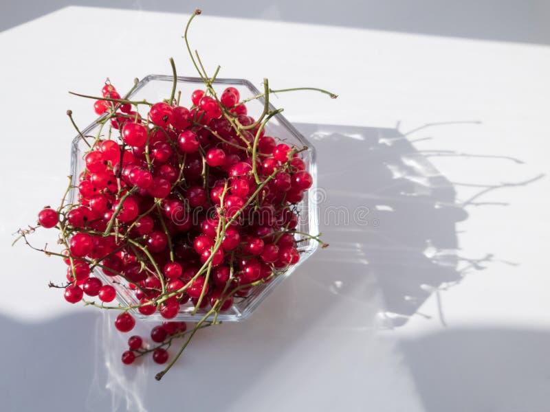 新近地采摘了在玻璃碗的红浆果 光和阴影从阳光在白色背景 r 库存图片