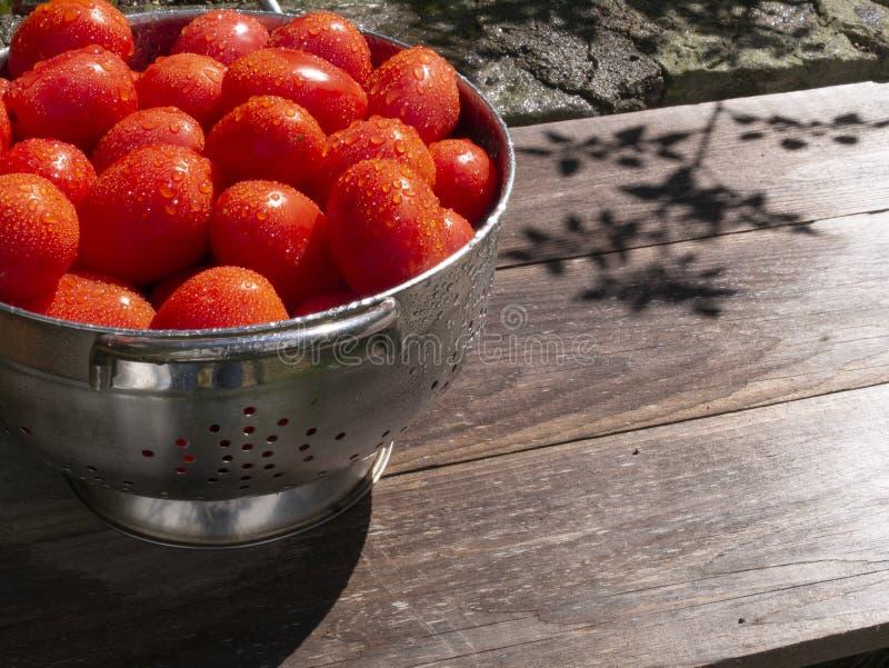 新近地采摘了并且洗涤了在滤锅的蕃茄在阳光下 免版税库存照片