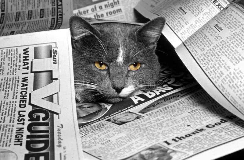 Download 新闻 库存照片. 图片 包括有 宠物, 纵向, 国内, 照片, 报纸, 乐趣, 媒体, 敌意, 题头, 茴香 - 181906