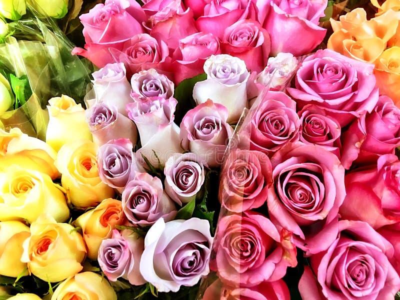 新鲜和五颜六色的玫瑰 库存照片