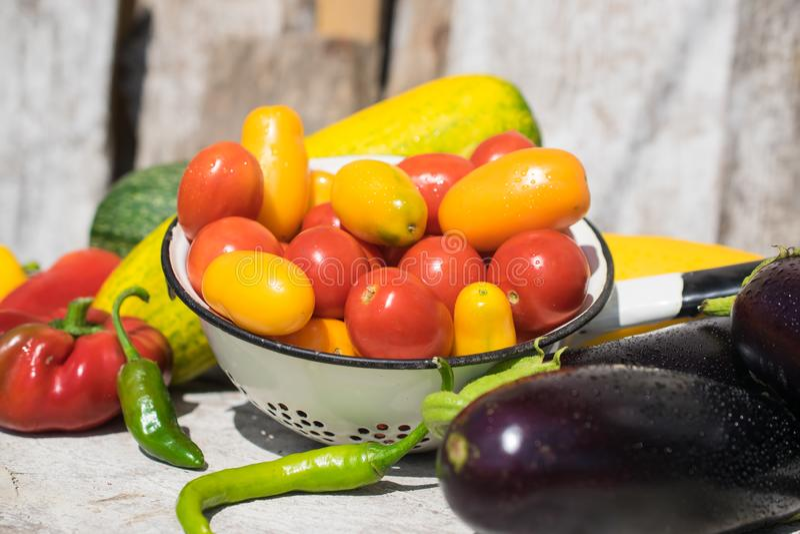 新鲜和健康有机蔬菜夏天收获  库存图片