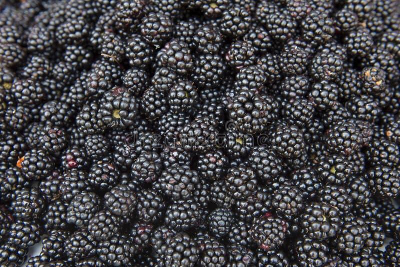 新鲜和鲜美黑莓 库存照片