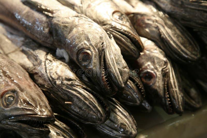 新鲜显示的鱼 免版税库存照片