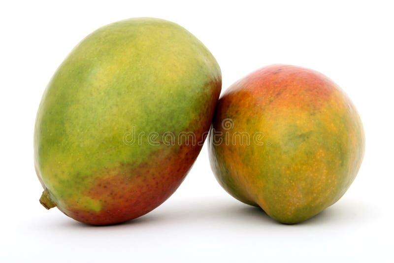 新鲜水果热带绿色的芒果 库存图片