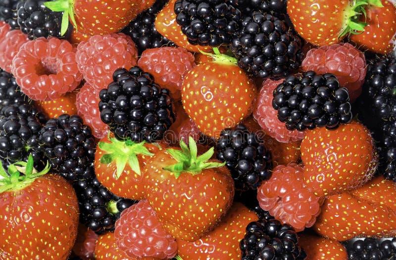 新鲜浆果的选择 免版税库存照片