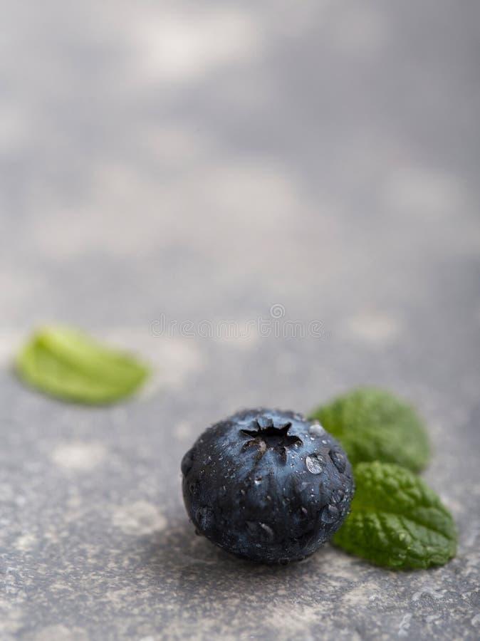 新鲜湿billberry 免版税库存照片